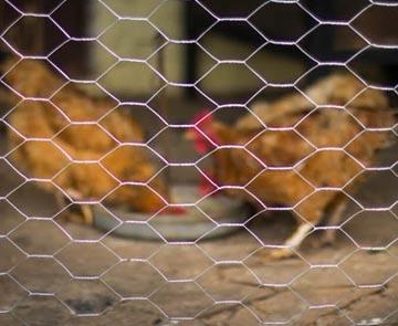 Hexagonal Chicken Wire